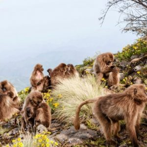 Simien Mountain Trekking